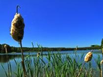 Jezioro Czarne, okolice Niesiołowic
