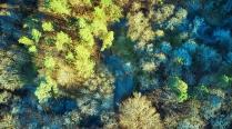 Rzeka Radunia-4