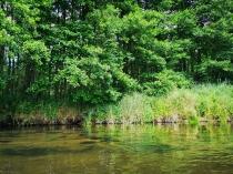 Rzeka Słupia-3