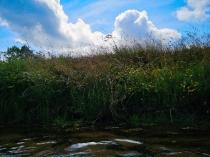 Rzeka Słupia-5