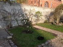 Wiosenne drzewa-2