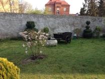 Wiosenne drzewa-3