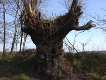 Wiosenne drzewa-4