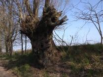 Wiosenne drzewa-5