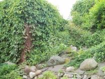 Ogród w Mirachowie_15