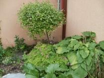 Ogród w Mirachowie_26
