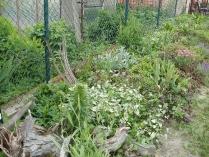 Ogród w Mirachowie_32