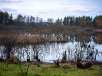 Borowo Jezioro-3