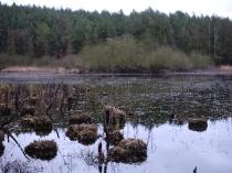 Borowo Jezioro-9