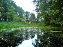 Stara rzeka przy jeziorze Kłodno;