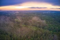 Las w okolicy Czapiewskiego Młyna-1