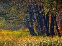 Kartuzy - Jeziora Klasztorne - jesien_35
