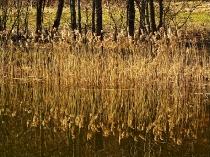 Wiosna w Kartuzach Jezioro Klasztorne Duze i Male_13
