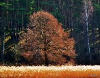 Jesien na Kaszubach_12