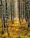 Jesien nad Wda_2